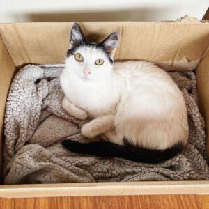 Gatos cajas amor