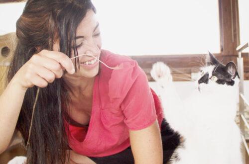 cómo nos hablan los gatos