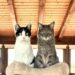 gatos, edad, salud, años, humanos