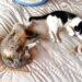 cuánto duermen los gatos