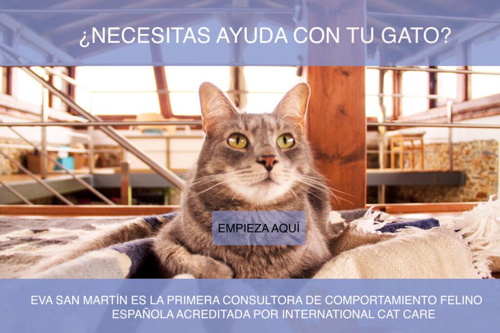 consultas felinas, terapia gatos, comportamiento,