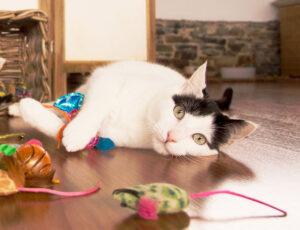 gatos ansiedad separación