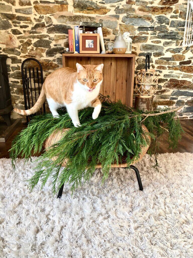 gatos árbol de navidad