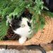 árbol de navidad gatos
