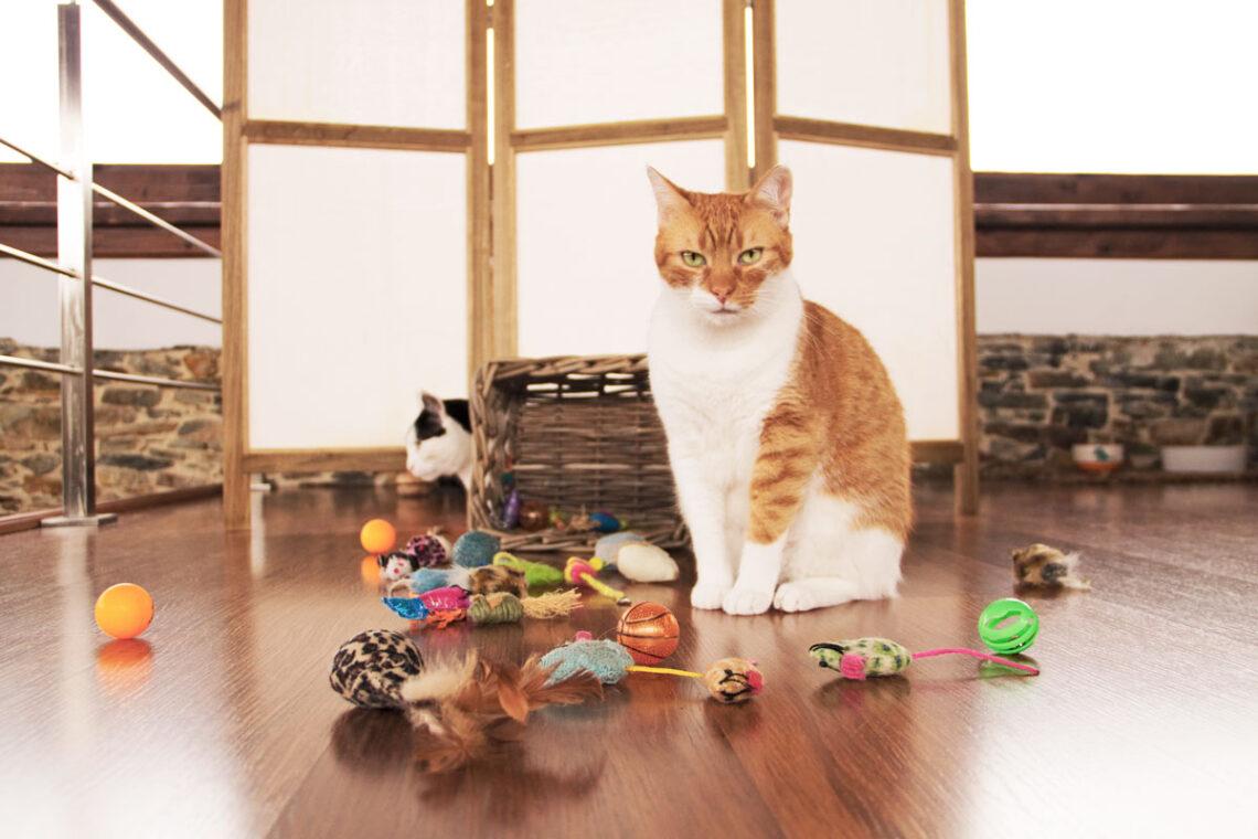 gatos traen juguetes y maúllan