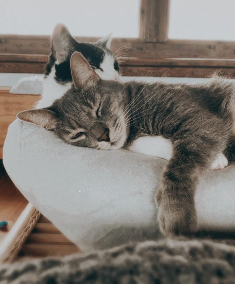 música para gatos relajan