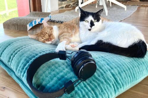 música gatos