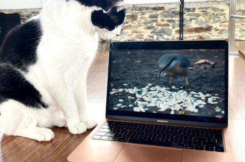 Televisión gatos